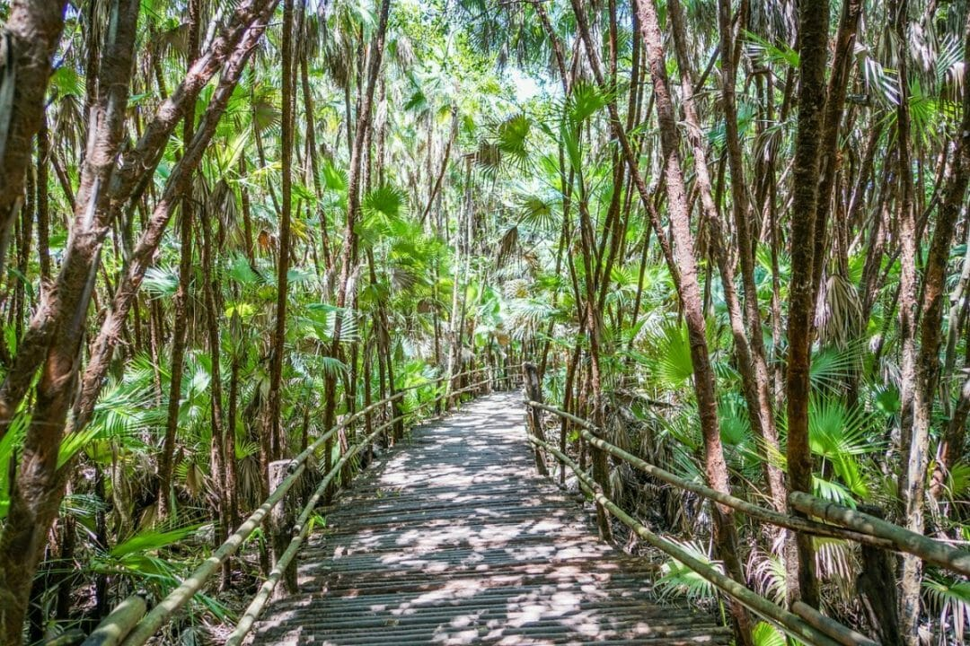 Enjoy the peacefulness of the jungle when you visit Belize