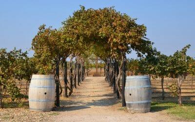 Lubbock Texas: a Wine Destination to Watch