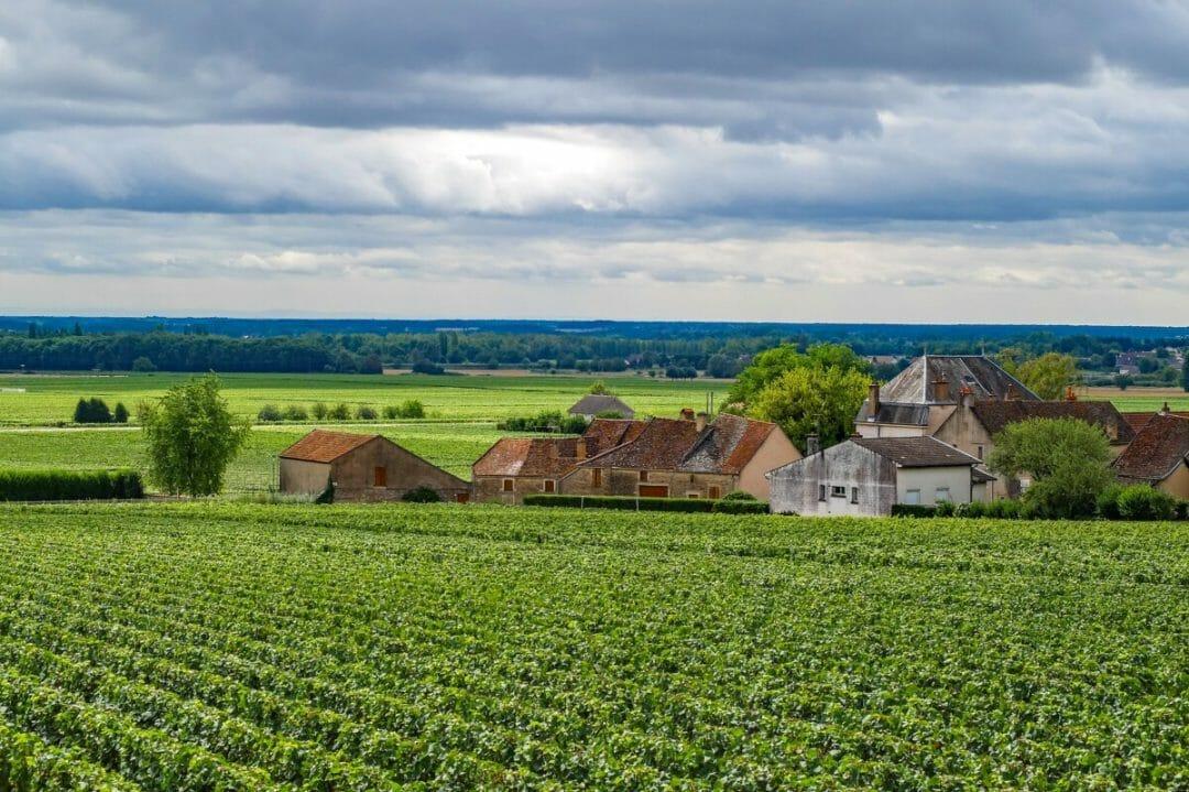 wines of Maison Louis Latour