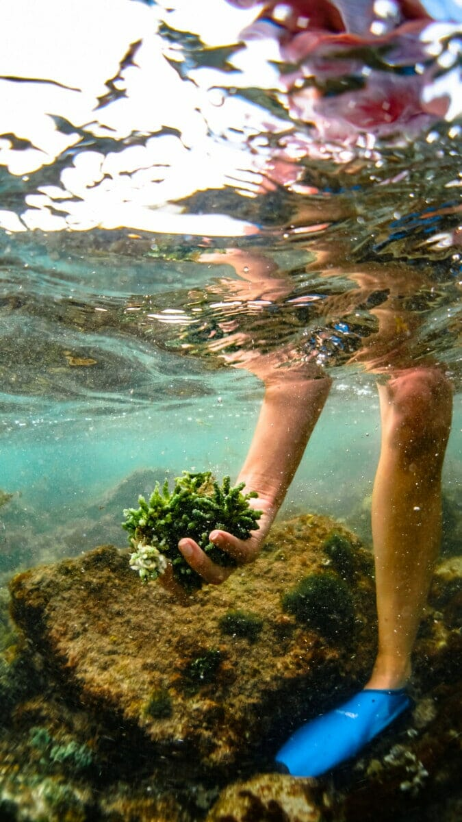 Ocean foraging at Punta Mita Mexico