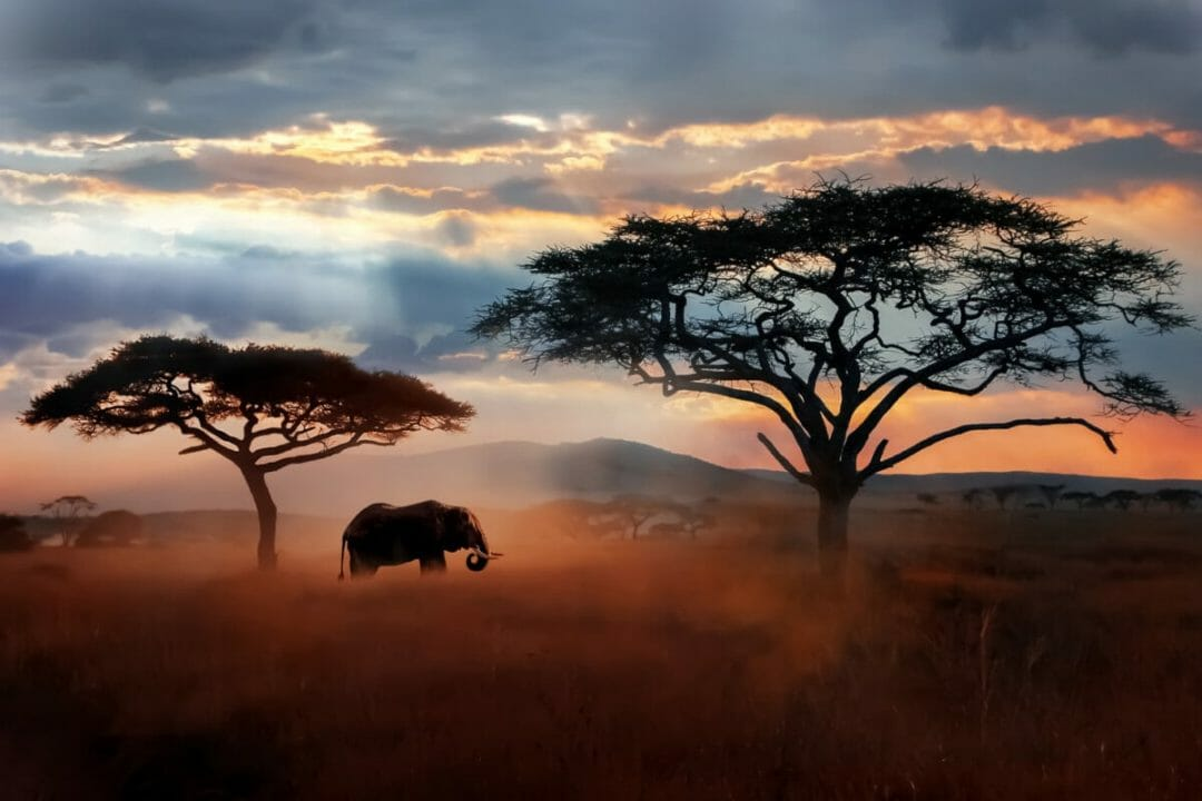 Zebra and Elephants in Zambia