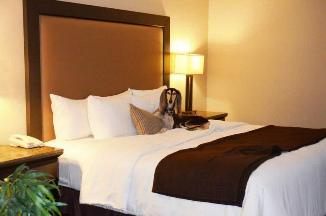 Pet-Friendly La Quinta Hotel with Zoe @Cori Solomon Paso Robles