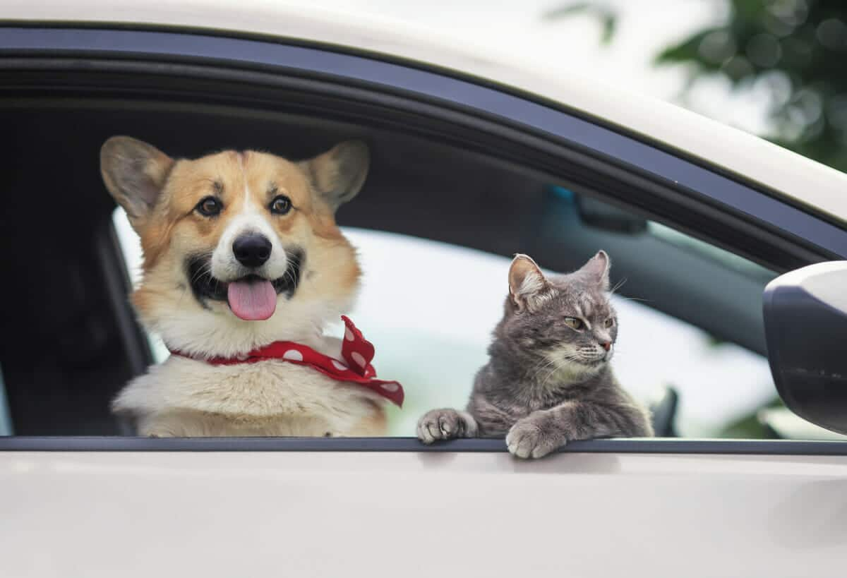 travel with your pets